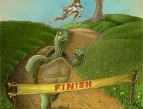 In the Race of Life, Be The Tortoise