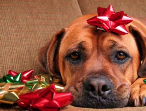 How to Deal with the Holiday Blues